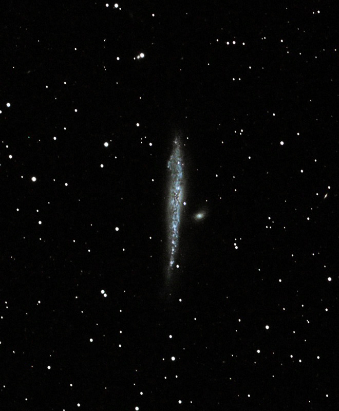 NGC 4631 Whale Galaxy By Vic Eden